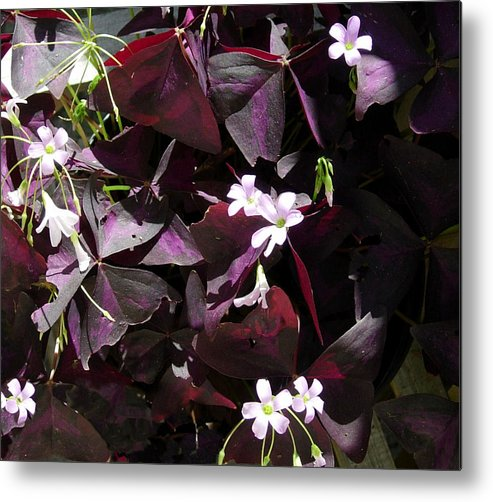 Flowers Metal Print featuring the photograph Purple Leaves With Tiny Pink Flowers by Stephanie H Johnson