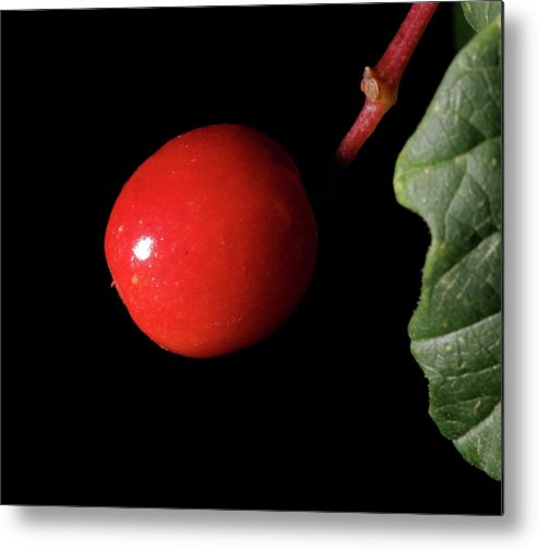 Flower Metal Print featuring the photograph red by Masami Iida