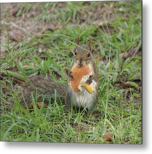 Squirrel Metal Print featuring the painting Sometimes I Feel Like A Nut by Debbie May