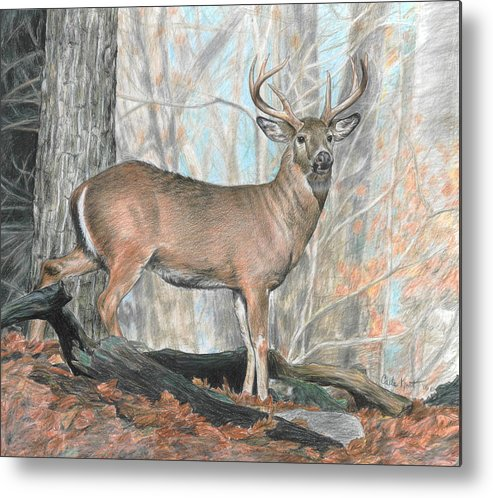 Deer Metal Print featuring the drawing Whitetail Buck by Carla Kurt