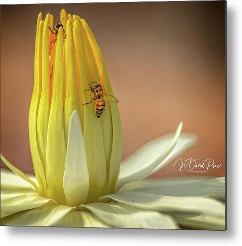 Flower Art by David Pine