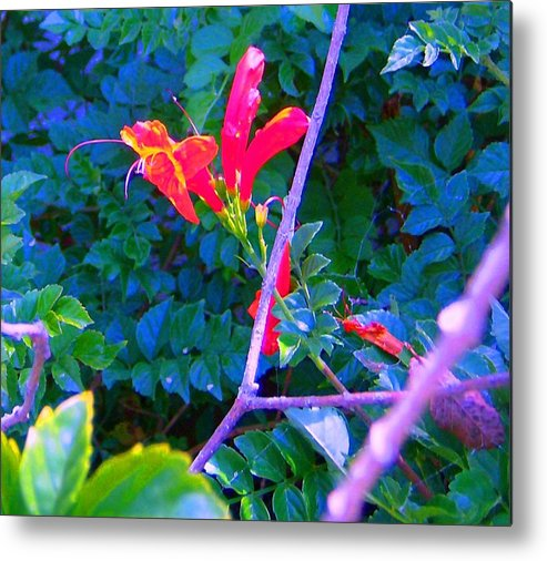 Florals Metal Print featuring the photograph Floral 5 by Dan Twyman