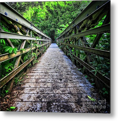 Bamboo Metal Print featuring the photograph Into The Jungle by Edward Fielding