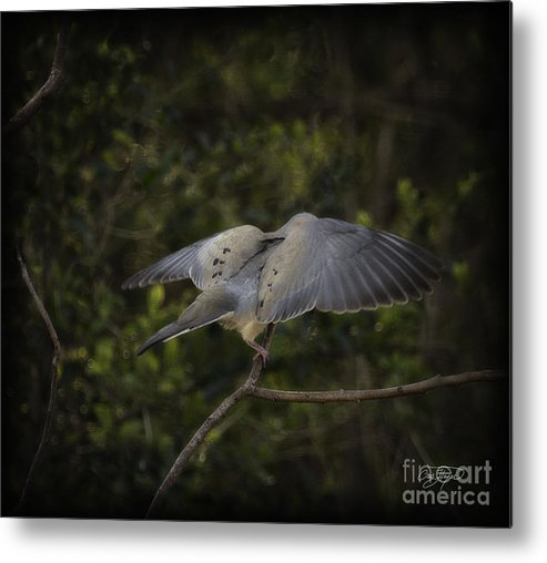 Bird Metal Print featuring the photograph Peace by Cris Hayes