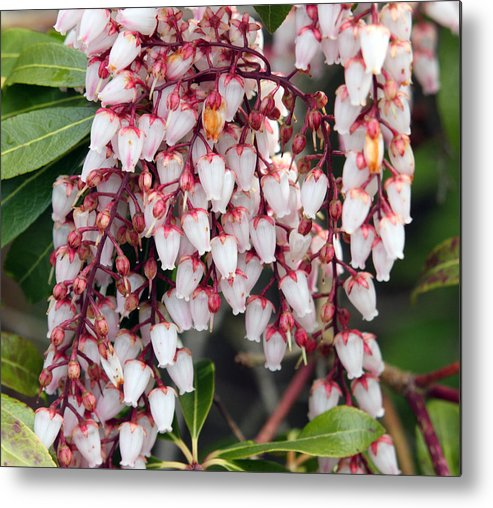 Nature Metal Print featuring the photograph Flowers - 0055 by S and S Photo