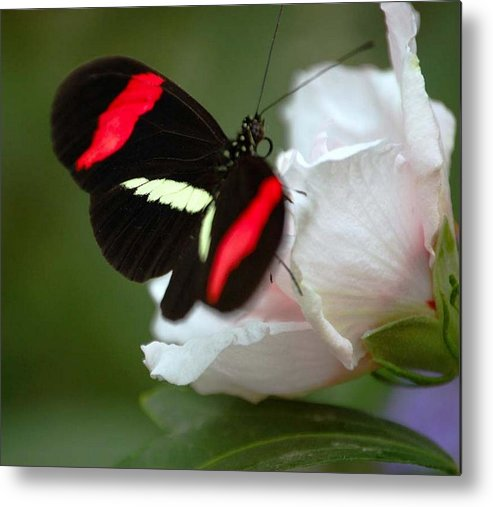 Butterfly Metal Print featuring the photograph Beauty by Scott Gould