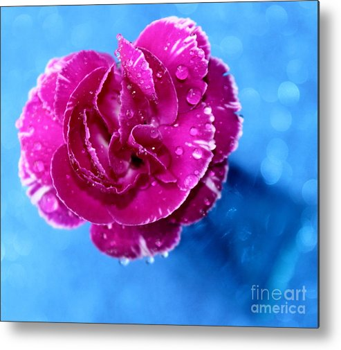 Carnation Metal Print featuring the photograph Much Love by Krissy Katsimbras