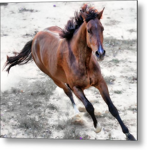 Horizontal Metal Print featuring the photograph Warmblood Horse Galloping by Vanessa Mylett