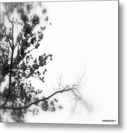 Digital Photos Metal Print featuring the photograph Leaves by Micheal Driscoll