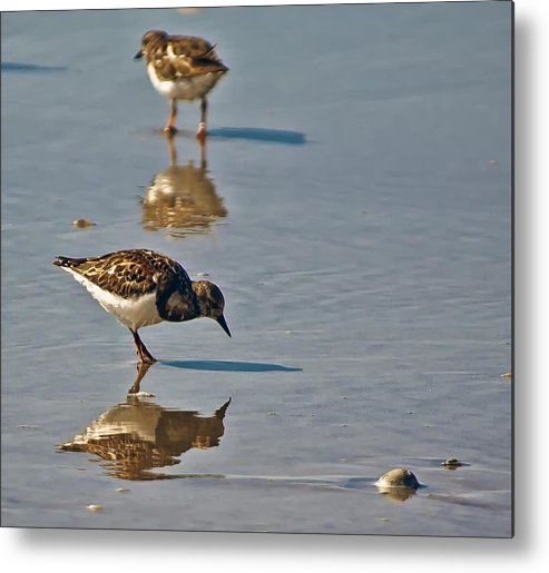 Birds Metal Print featuring the photograph Searching by Nancie Rowan