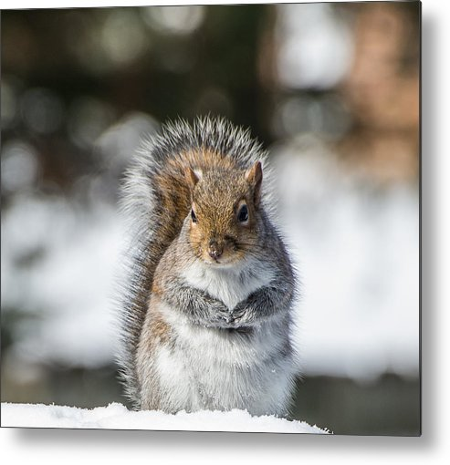 Squirrels Metal Print featuring the photograph Spring Prayer by Diane Travis