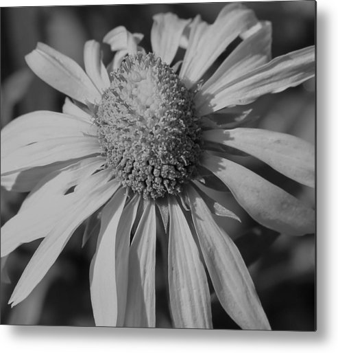 Flower Metal Print featuring the photograph Too Wide Bw by Kevin Buffington