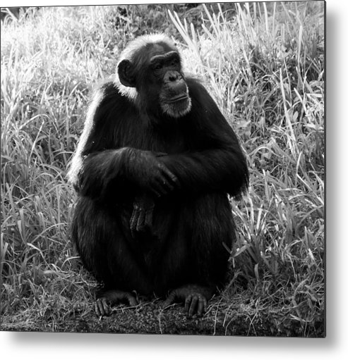 Fine Art Photography Metal Print featuring the photograph Thinking by David Lee Thompson
