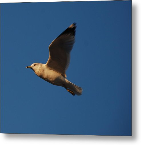 Bird Metal Print featuring the photograph In Flight by Richard Bryce and Family