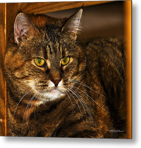 Cat Metal Print featuring the photograph Kitty Cat by Edward Peterson