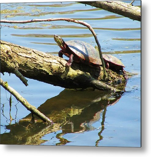 Mother And Baby Turtle Metal Print featuring the photograph Mother's Day by Todd Sherlock