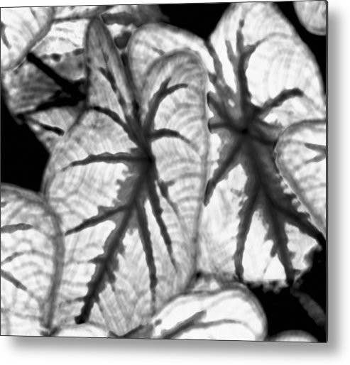 Metal Print featuring the digital art Black And White Was My First Love by John Toxey