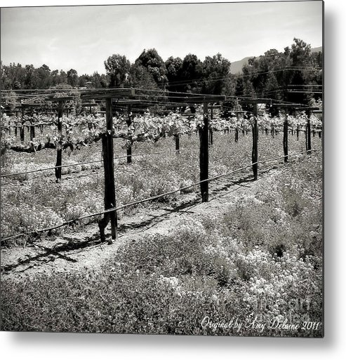 Nature Metal Print featuring the photograph Abandoned Dried Old Vineyard by Amy Delaine