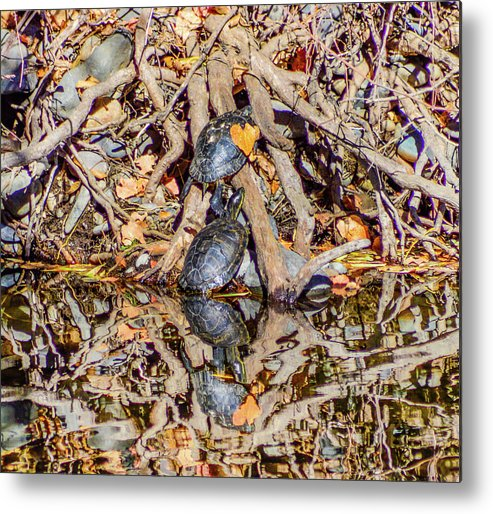 Turtles Metal Print featuring the photograph Bidwell Turtles In Fall by Keith Lander