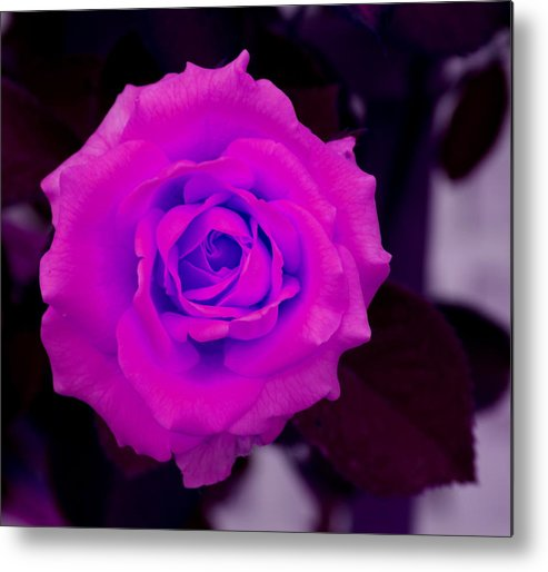 Floral Metal Print featuring the photograph Bloom N Love-abstract by Debbie May