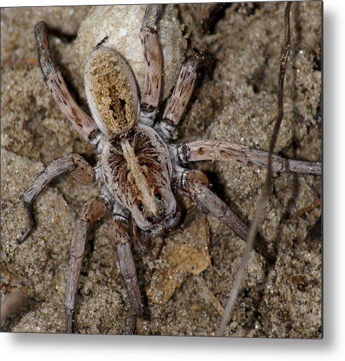 Spider Metal Print featuring the photograph Charlotte by Debbie May