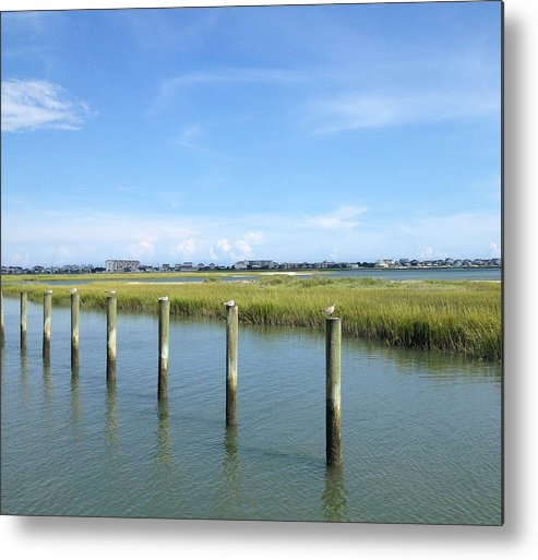 Seagull Metal Print featuring the photograph Seagull Line by Carol Anne Dillon