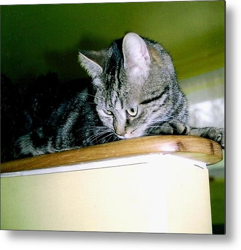 Cat Metal Print featuring the photograph Woo Woo by George Penon Cassallo