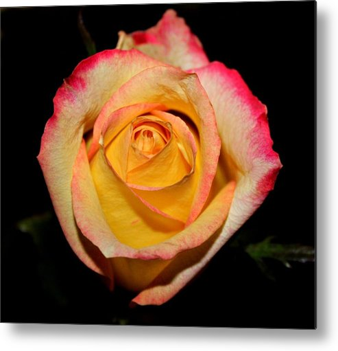 Metal Print featuring the photograph Yellow Center by Cathie Tyler
