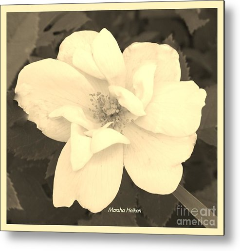 Photo Metal Print featuring the photograph Rose Sepia by Marsha Heiken