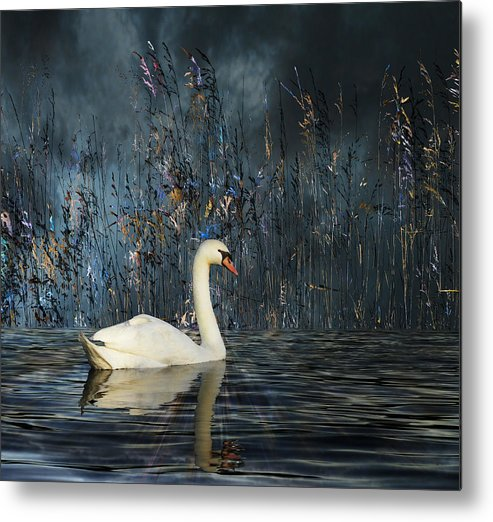 Animal Metal Print featuring the photograph 2805 by Peter Holme III