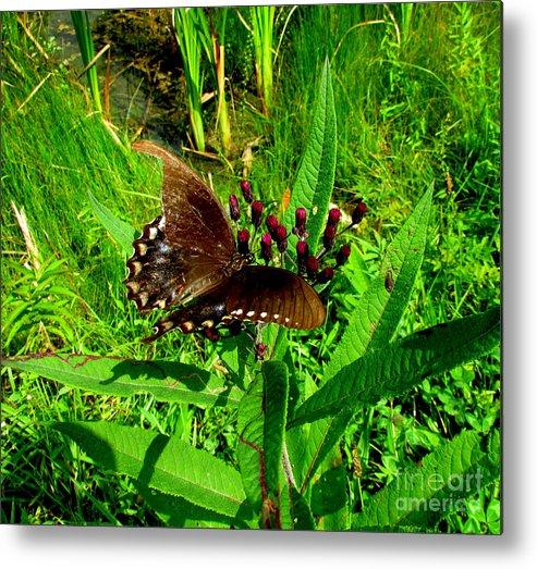 Butterfly Metal Print featuring the photograph Aep903a by Scott B Bennett