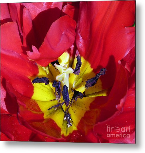 Tulip Metal Print featuring the photograph Centre Of A Tulip by Lynn Bolt