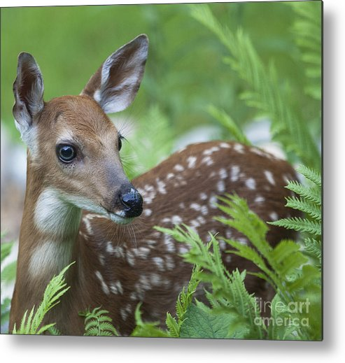 Deer Metal Print featuring the photograph Flora And Fawna by Emma England