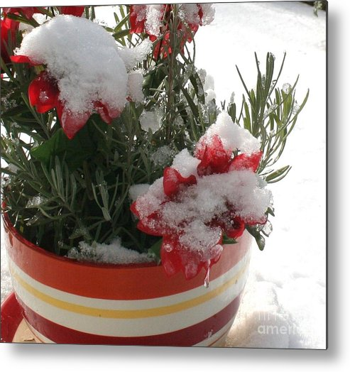 Christmas Metal Print featuring the photograph Frozen Christmas Flowers by Deborah A Andreas