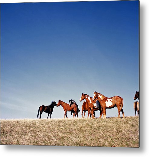 Horses Metal Print featuring the photograph Getting Frisky by Carla P White