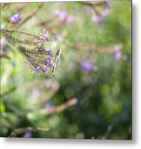 Butterfly Metal Print featuring the photograph In The Garden by Mary OMalley