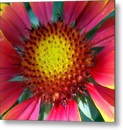 Nature Metal Print featuring the photograph Red Yellow Flower by Duwayne Washington