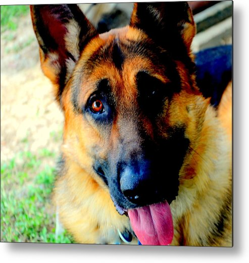 Puppies Metal Print featuring the photograph Rommel One by Antonia Citrino