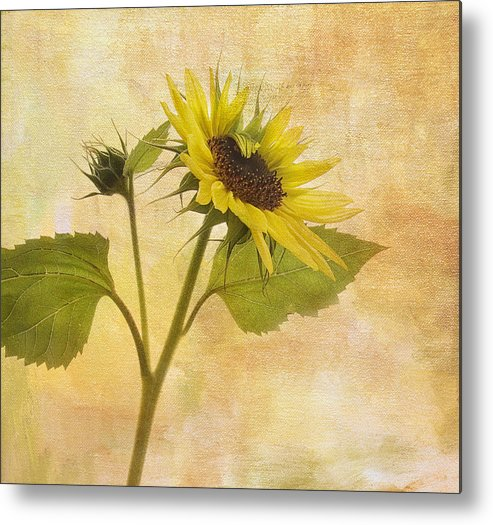 Sunflower Metal Print featuring the photograph Saying Goodbye To Summer by Rebecca Cozart