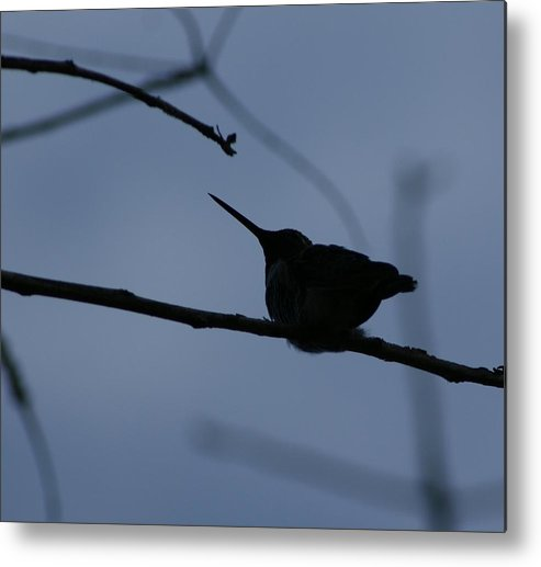 Hummingbird Metal Print featuring the photograph Hummingbird by Liz Vernand