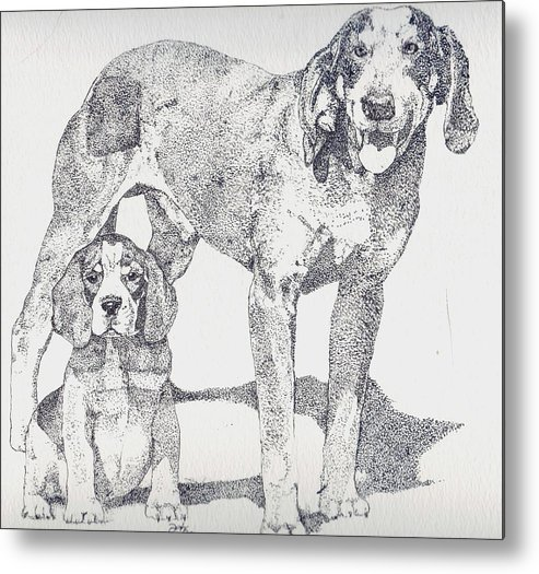 Bluetick Coonhound Metal Print featuring the drawing Like Father Like Son by Debra Sandstrom