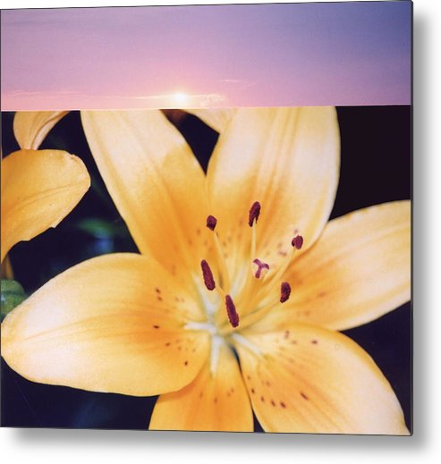 Nature Metal Print featuring the photograph Lilies And Sky 3 by Lyle Crump