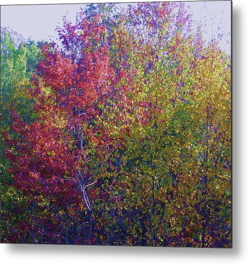 Fall Leaves Metal Print featuring the photograph Polychromatic by Cathy Sosnowski