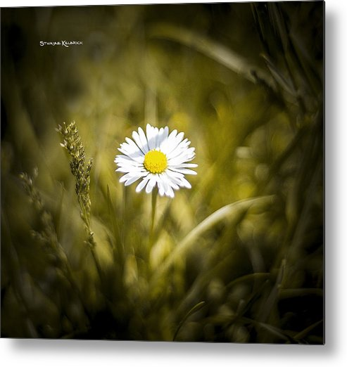 Flower Metal Print featuring the photograph The Lonely Daisy by Stwayne Keubrick