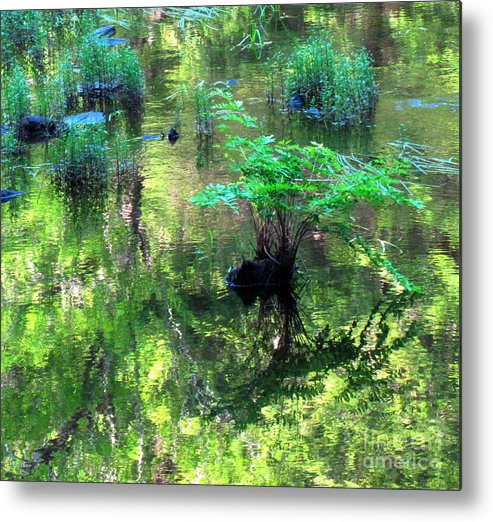 Water Metal Print featuring the photograph Vision Restored by Sybil Staples
