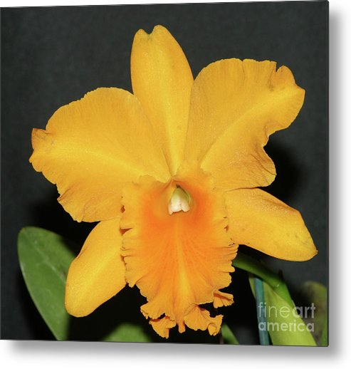 Flower Metal Print featuring the photograph Yellow Orchid by Wally Franiel