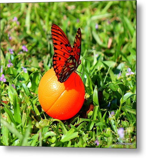 Butterflies Metal Print featuring the photograph Butterflies by Jessica Christensen