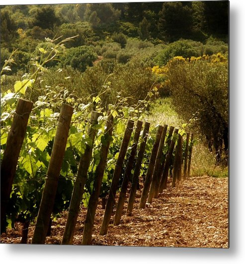 Wine Metal Print featuring the photograph Wine Growing Pouring And Enjoying by Christine Burdine