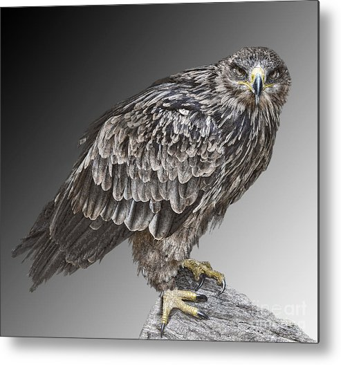 Bird Of Prey Metal Print featuring the photograph African Tawny Eagle by Sheila Laurens
