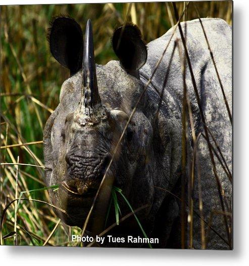 A Black One Horned Rhino At Kaziranga National Park Metal Print featuring the photograph Rhino by Tues Rahman